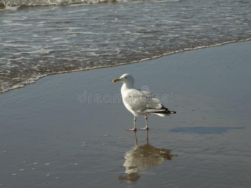 海滩和seasight在Wijk aan Zee 免版税库存图片