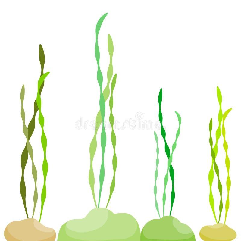 海藻在海 向量例证