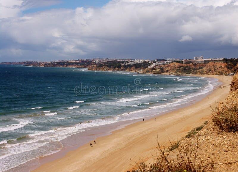 海滩在葡萄牙的阿尔加威地区 冲浪的人们游泳和 在前景的杉树 顶视图 免版税库存照片