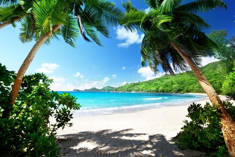 海滩在Mahe海岛,塞舌尔群岛 库存图片