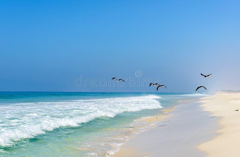海滩塞拉莱, Dhofar (阿曼) 库存照片