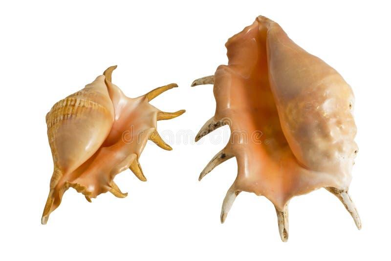 海洋壳 图库摄影
