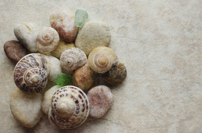 海洋壳 免版税图库摄影