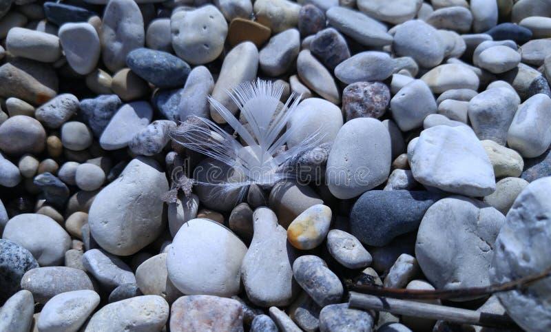 海滩岩石和羽毛 库存图片