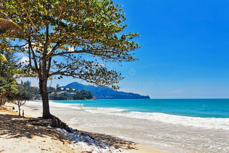 Download 海滩异乎寻常热带 库存图片. 图片 包括有 自然, 颜色, beauvoir, 火箭筒, 天空, 绿色, 云彩 - 62525353