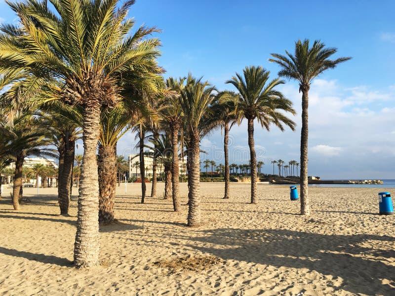 海滩掌上型计算机夏天结构树假期 库存照片
