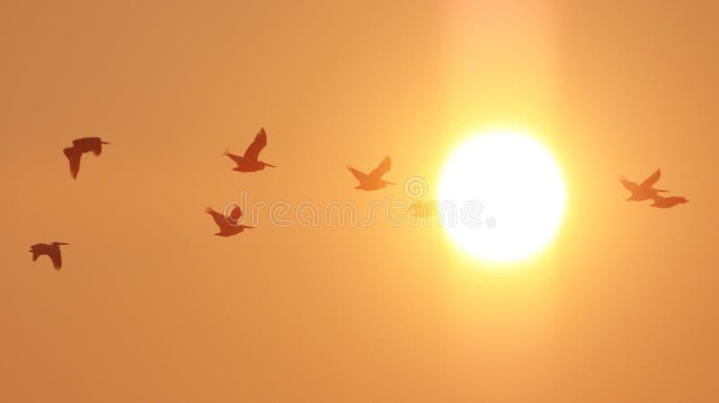 Download 海滩日出 库存图片. 图片 包括有 鸟舍, 颜色, 气候, 云彩, 自然, 节假日, 火光, 泡沫, 横向 - 62534371