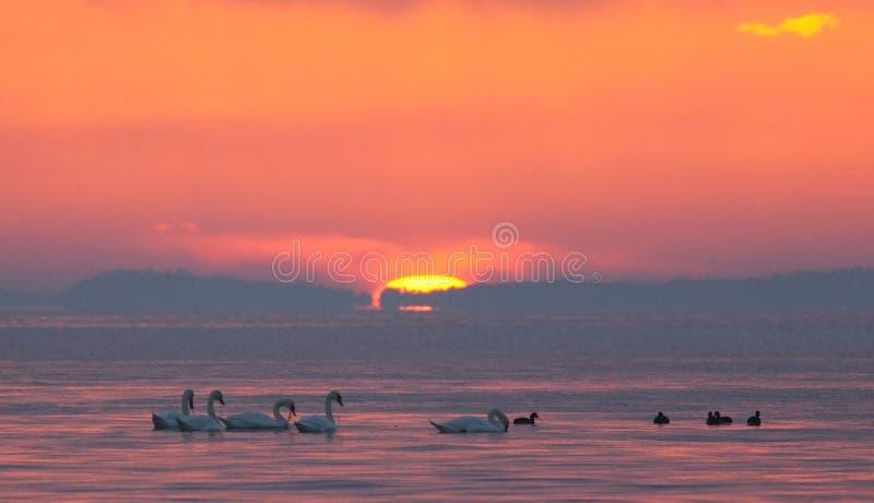 Download 海滩日出 库存图片. 图片 包括有 横向, 改良, 小珠靠岸的, 小船, 自然, 生态, 节假日, 上色 - 62534841