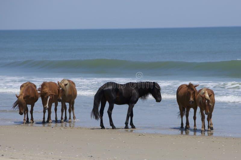 海滩时间 库存照片