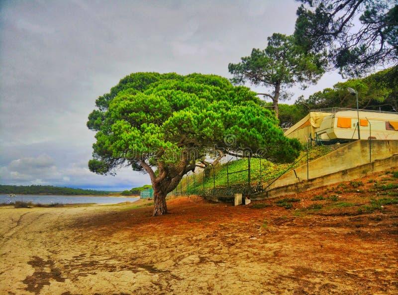 海滩树 库存图片