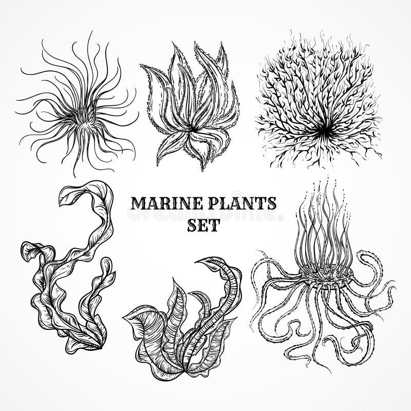 海洋植物、叶子和海草的汇集 皇族释放例证