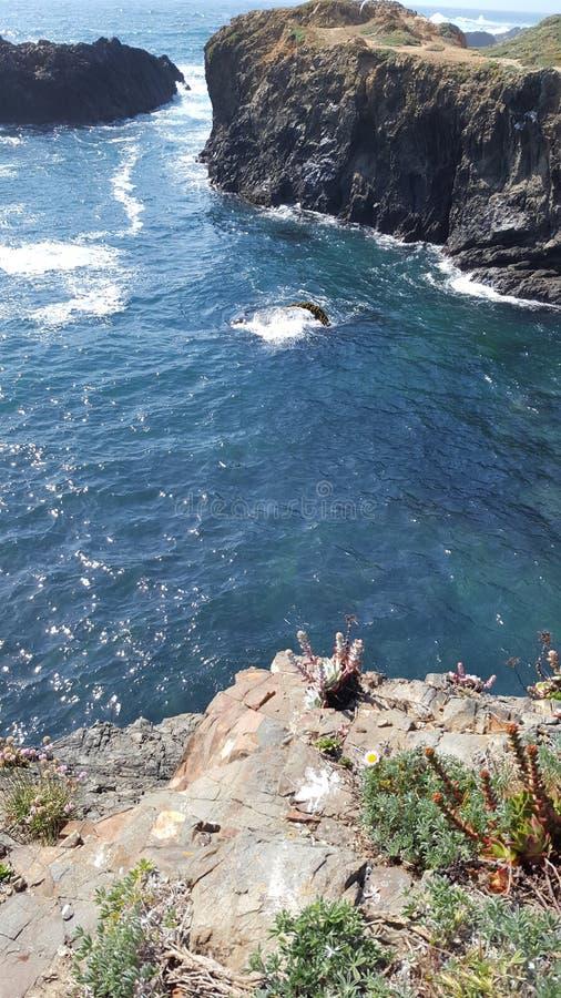 海洋植物 图库摄影