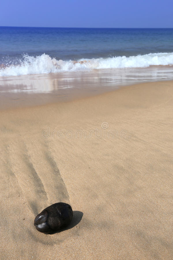 海滩椰子横向夏天 免版税库存图片
