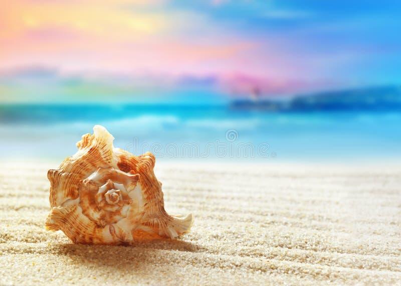 海滩概念含沙海运壳假期 库存照片