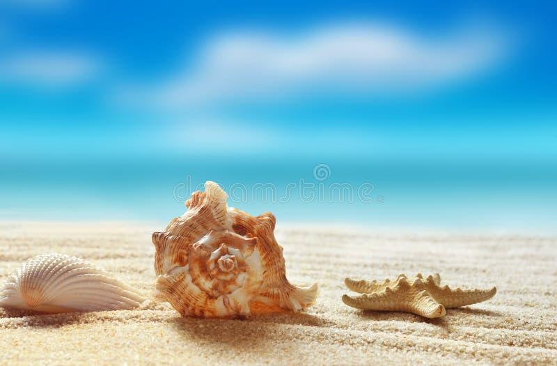 海滩概念含沙海运壳假期 免版税库存图片