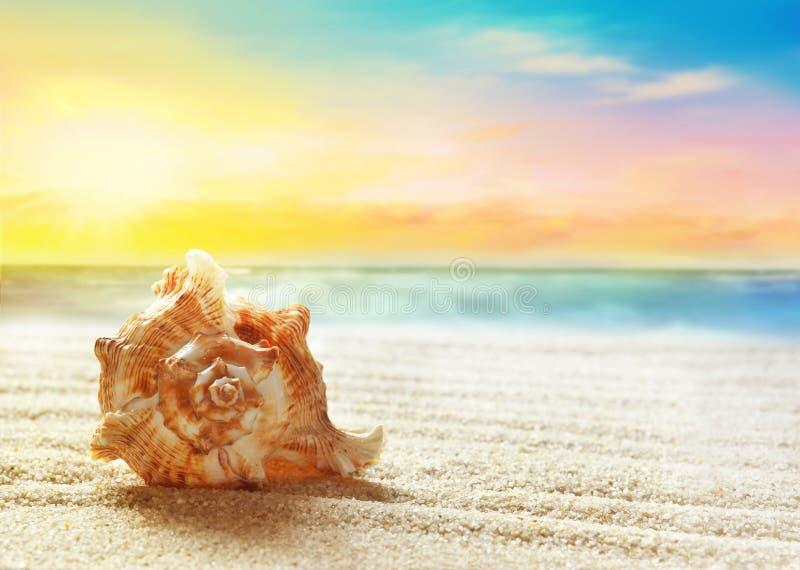 海滩概念含沙海运壳假期 免版税库存照片