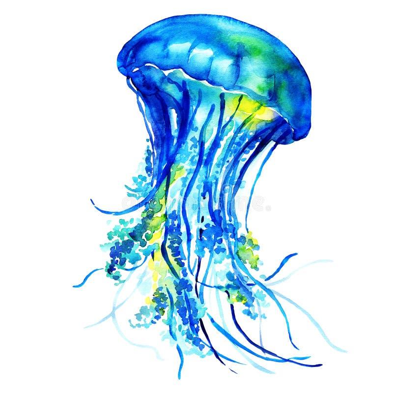 海洋水水母 皇族释放例证
