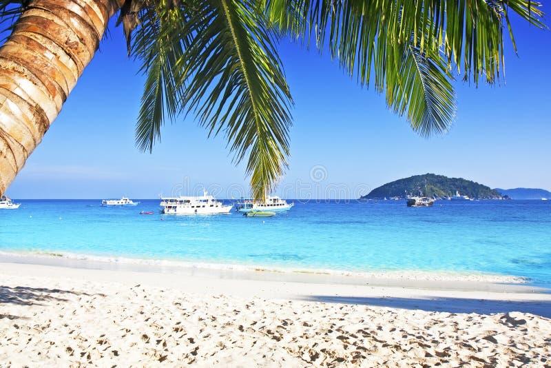 海滩沙子热带白色 免版税库存照片