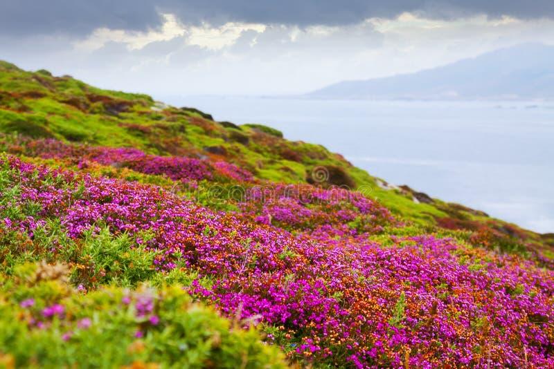 海洋海岸的荒地植物 库存图片
