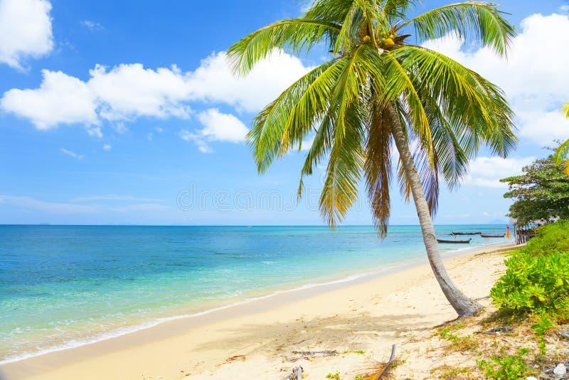 海滩热带的可可椰子 图库摄影