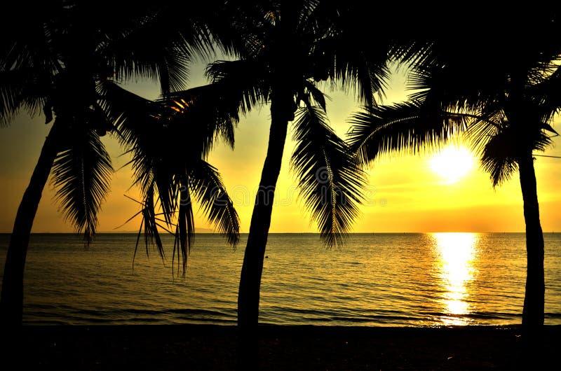 海滩热带的椰子树 免版税图库摄影