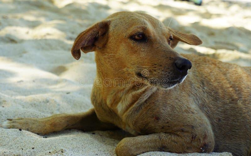 海滩狗 免版税库存照片