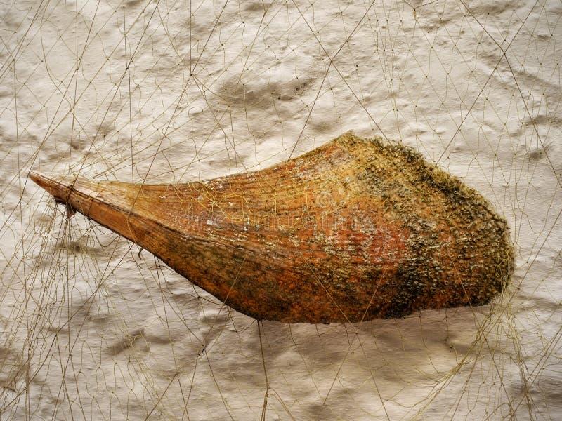 海洋生物装饰 库存照片