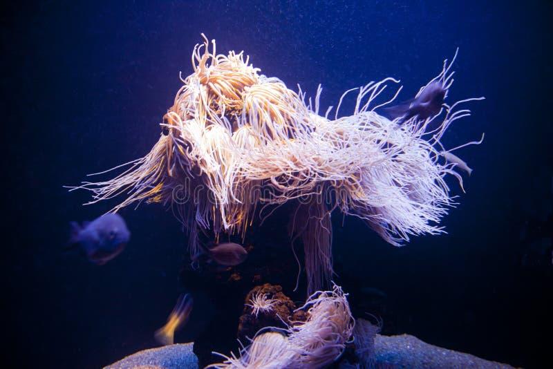 海洋生物 库存照片