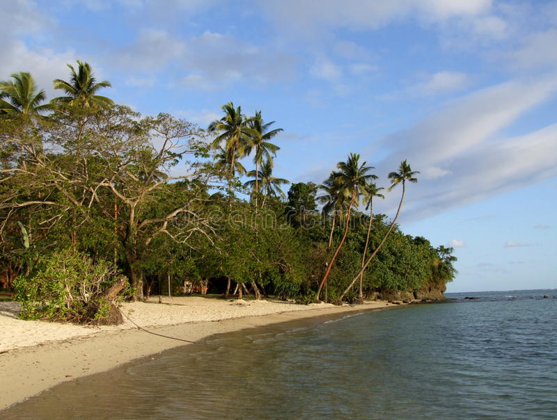 海滩的棕榈树丛 免版税库存图片
