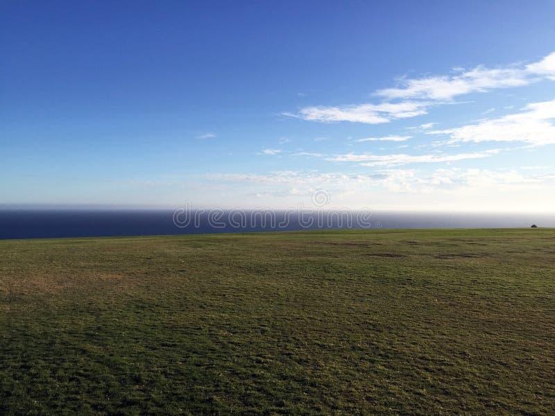 海洋的看法一个象草的领域的 免版税库存照片