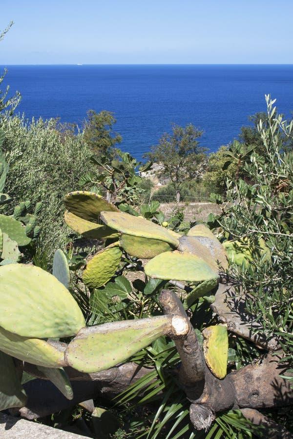 海洋的看法从小山的在斯科佩洛,西西里岛,意大利 库存照片