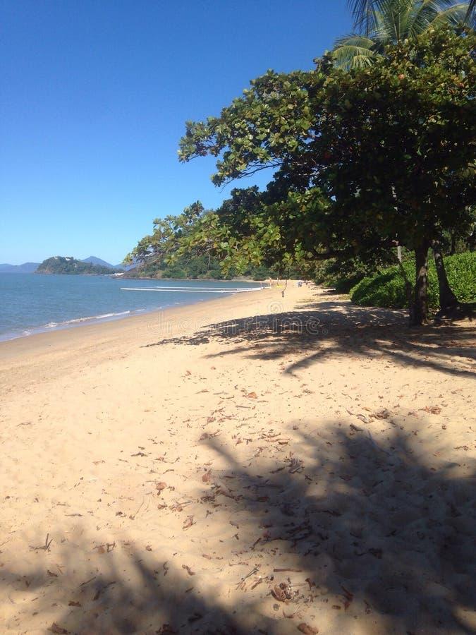 海滩盐水天蓝色树 免版税库存图片