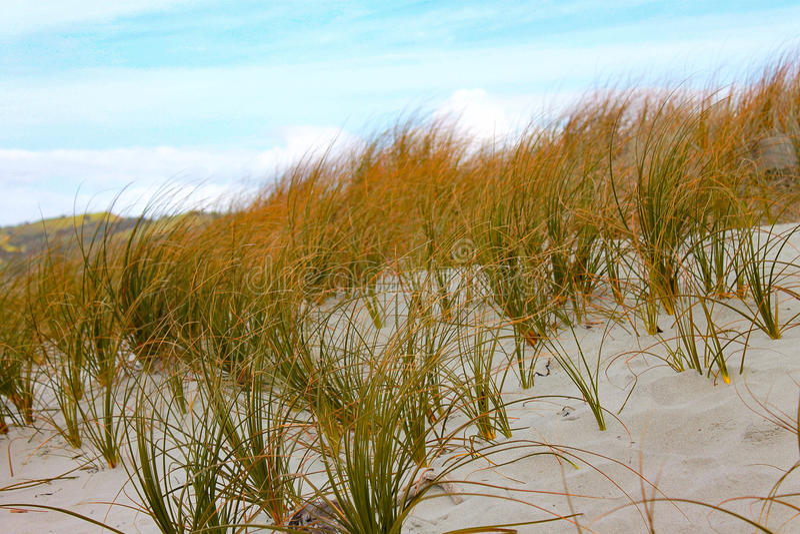 海滩自然植被 库存照片