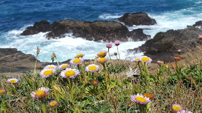 海洋紫色花 库存图片