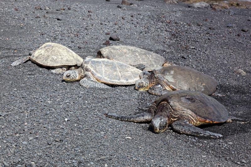 海滩黑色绿色沙子海龟 库存照片