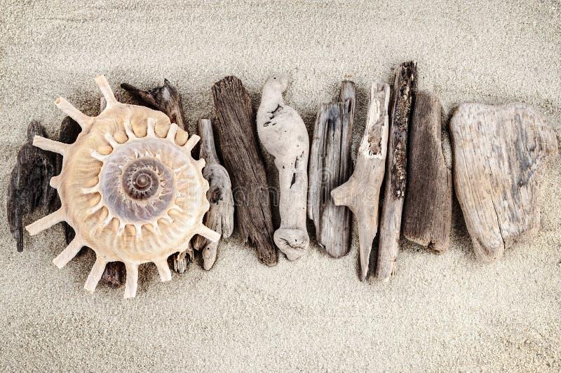 海洋静物画。 免版税库存照片