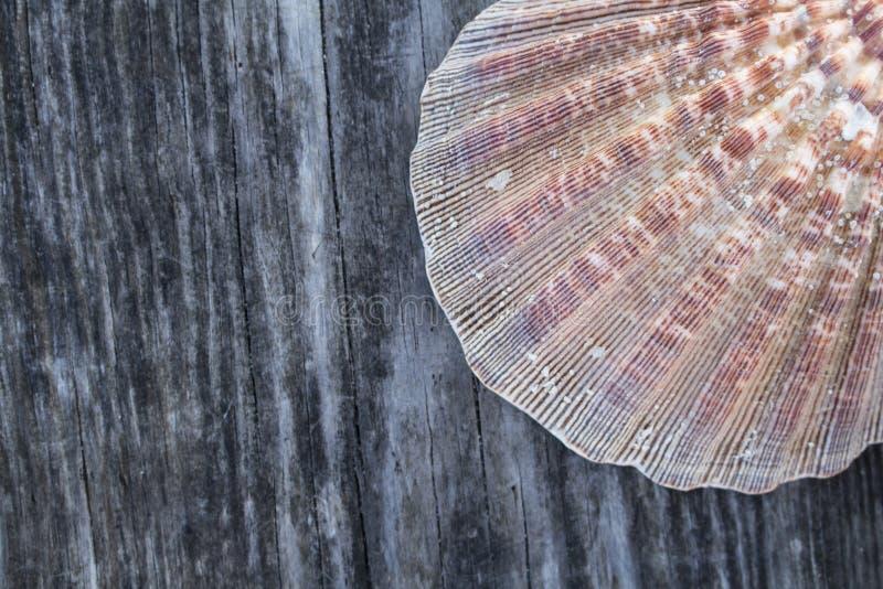 海滩题材木头背景 免版税库存照片