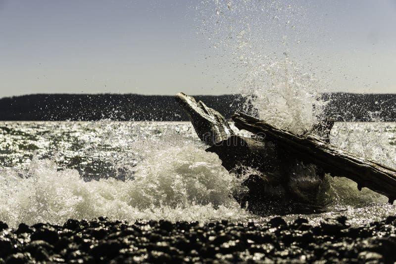 浸满水 免版税图库摄影
