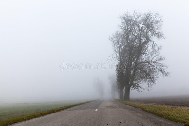 涂柏油的路、秋天和雾 免版税库存照片