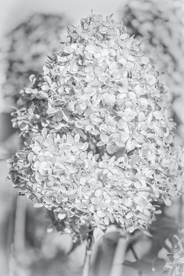 消失,燃尽的花 库存图片