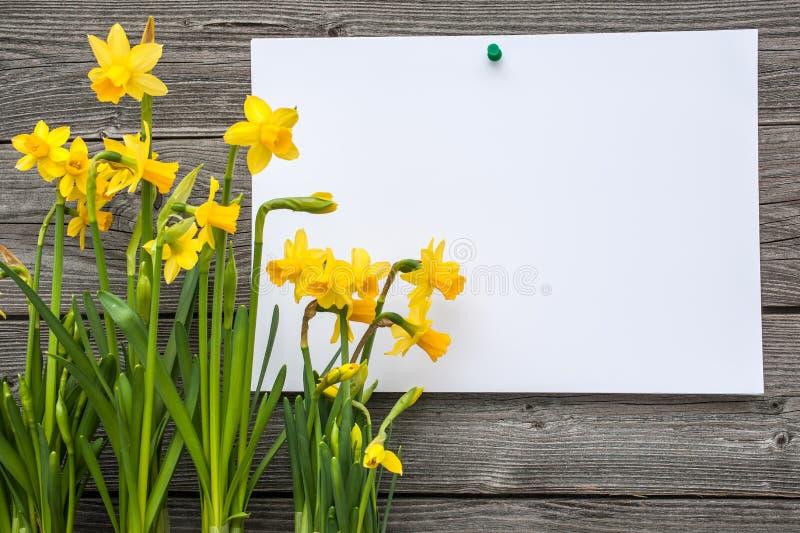 消息和春天黄水仙 免版税库存照片