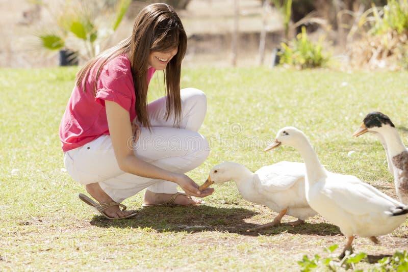 消磨时间和鸭子一起 免版税库存照片