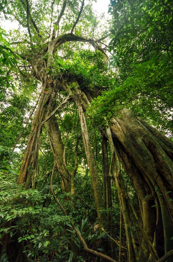消耗树的寄生生物 库存图片
