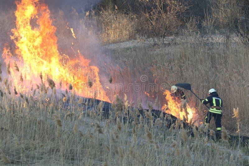 消防队员在春天作战野火 图库摄影