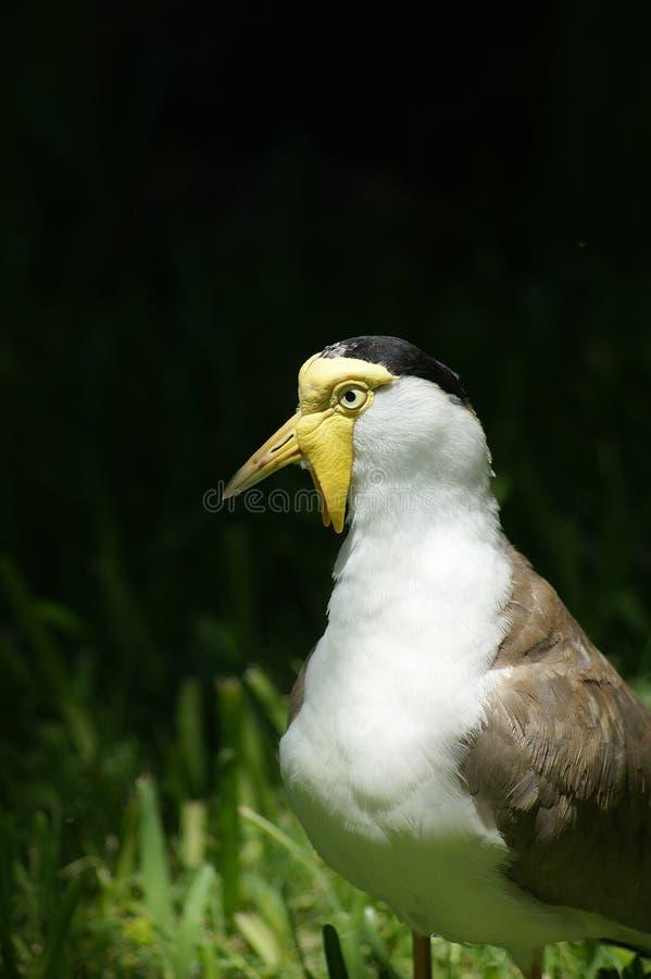 涉水鸟 图库摄影