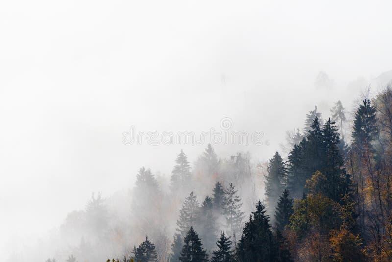 涌现从早晨雾的树 免版税库存图片