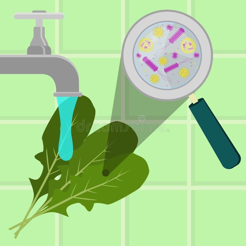 洗涤的污染的芝麻菜 皇族释放例证