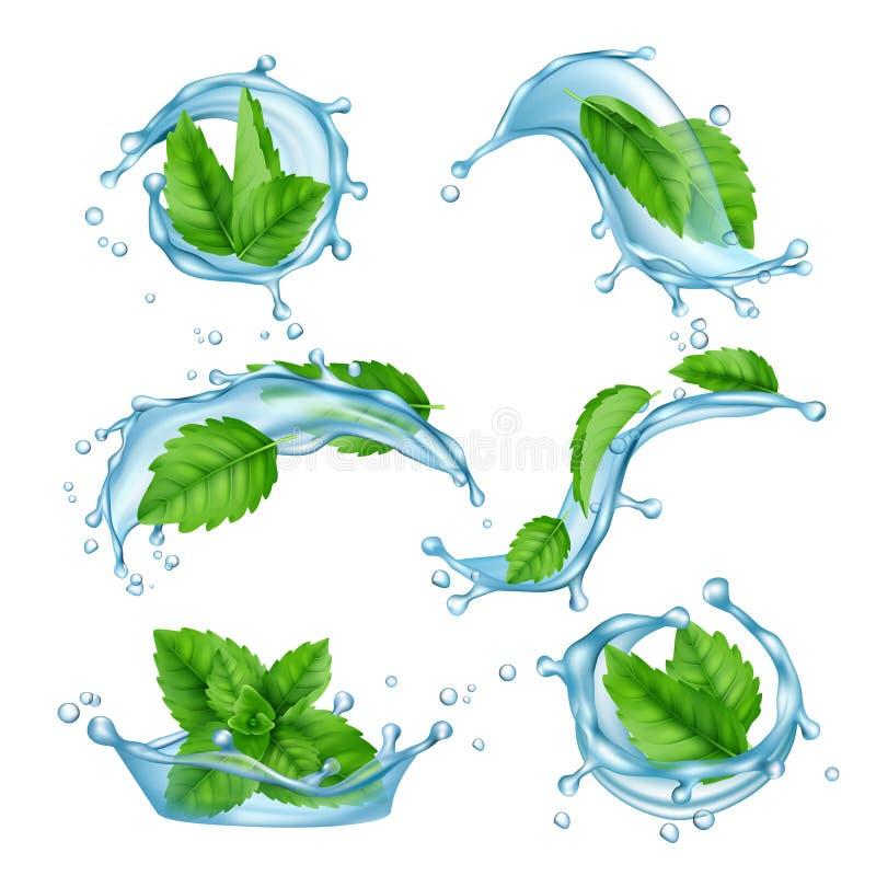 淡水薄菏 液体飞溅与饮料传染媒介现实收藏的绿色薄荷脑叶子 皇族释放例证