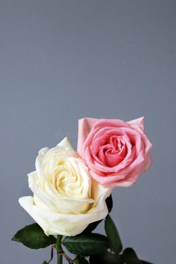 淡粉红色白色夫妇隔绝了深刻的爱卡片背景 库存照片