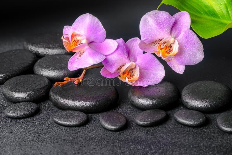 淡紫色兰花兰花植物,禅宗石头 免版税图库摄影